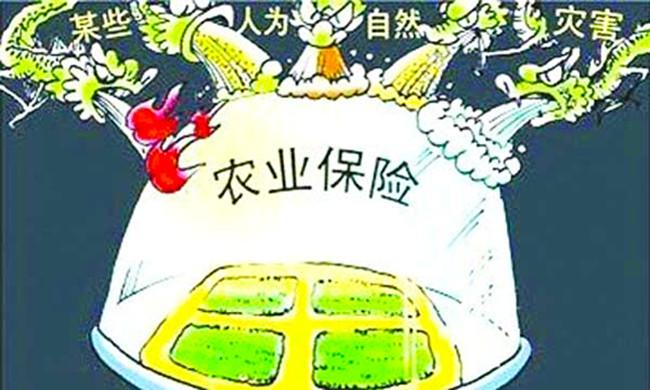 双浮镇2020年政策性农业保险工作情况 太和县人民政府